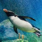 Experience Infinity Falls at SeaWorld!