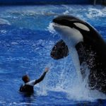 Top 5 Animals You Can Experience at SeaWorld