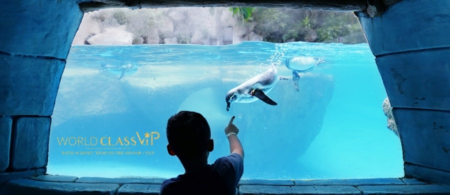 best-time-to-visit-seaworld